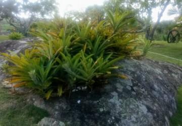 Chega a Caruaru um novo conceito em Paisagismo e Jardinagem