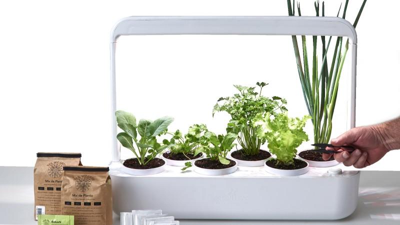 Com ciclo de iluminação inteligente, sistema autoirrigável e mix de plantio, produto tem capacidade para até seis plantas