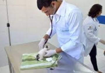 Hospital Veterinário do Recife agenda castrações gratuitas de novembro