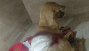 Mulher é suspeita de jogar soda cáustica em cadela em Belo Jardim