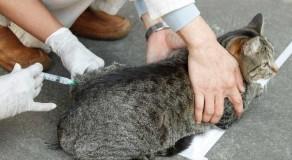 Caruaru realiza ação de vacinação antirrábica para cães e gatos da zona rural