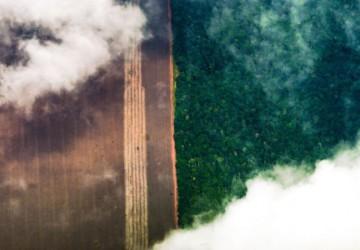 Entidades denunciam a política ambiental de Governo Federal