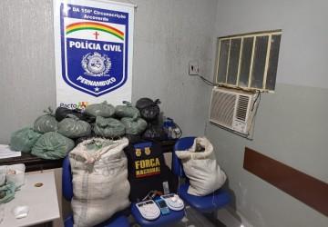 Polícia apreende arma, drogas e prende sete pessoas em Arcoverde