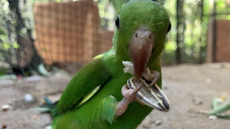 Confira os cuidados essenciais para escolher gaiola, comedouros, brinquedos e manter uma rotina saudável para a ave