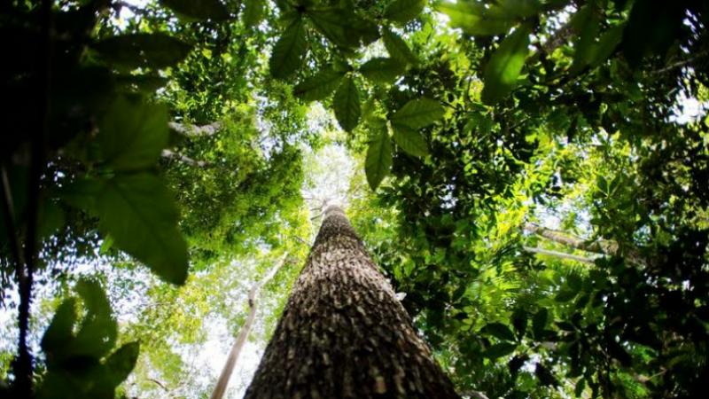 Empreendedores de Recife Desenvolvem Aplicativo que Combate o Aquecimento Global Reflorestando Biomas Ameaçados, Gera Renda para Comunidades Tradicionais e Descontos aos Usuários