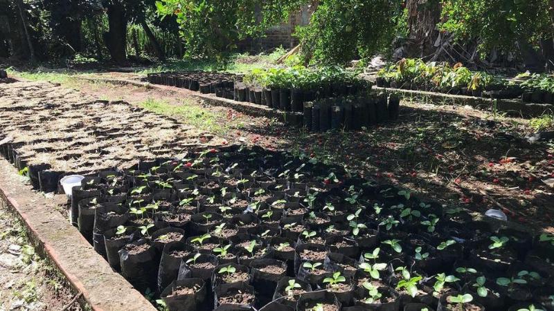 O objetivo é beneficiar os agricultores do município, que receberão mudas de futas e plantas nativas