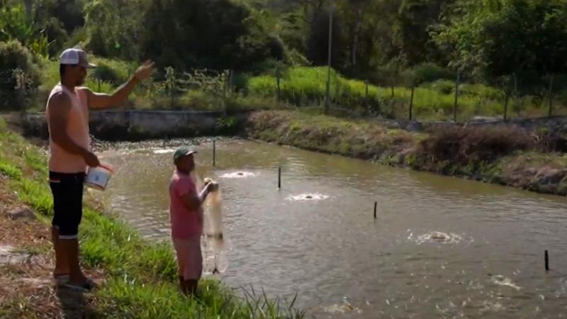 Agricultores familiares estão trabalhando com a criação de tilápia no município, eles recebem orientação técnica do Instituto Agronômico de Pernambuco (IPA)