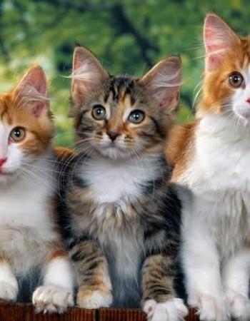 Prefeitura de Caruaru vai realizar mutirão de castração de gatos no bairro do Vassoural