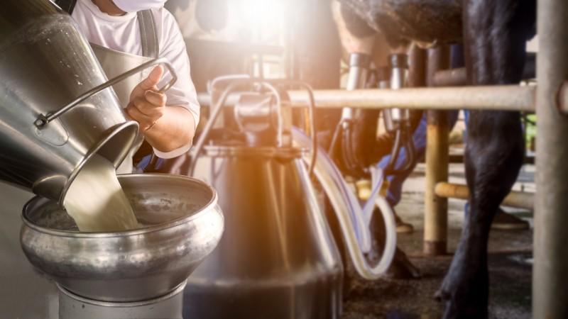 Do campo à mesa, o leite é fonte essencial no suprimento de alimentos de muitas famílias e fonte de renda para produtores rurais e indústria