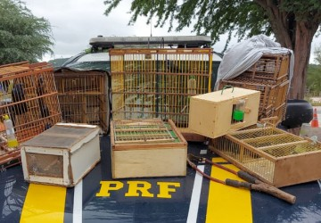 PRF apreende 41 pássaros silvestres na BR 232, em Sertânia