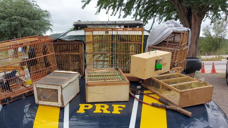 Aves haviam saído de Araripina e seriam comercializadas em São Bento do Una