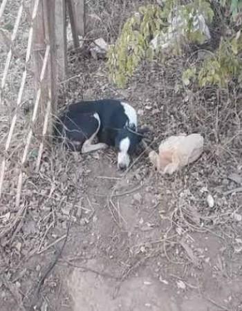 Polícia atende denúncia de zoofilia contra cadela